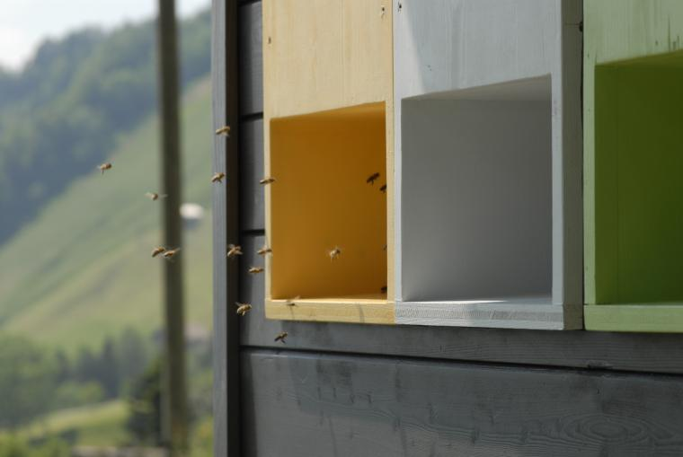 Honey  apiary